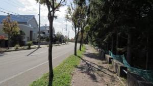 上野幌里塚循環通