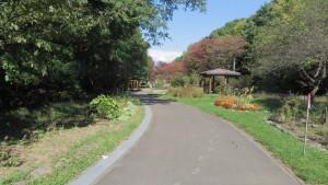園路(青葉中央公園)