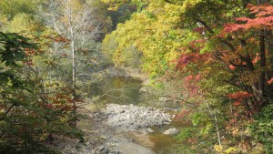 紅葉の中を流れる豊平川