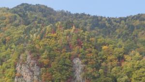 豊平川の断崖と紅葉