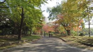 散策路と紅葉1