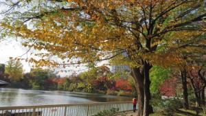 菖蒲池と紅葉