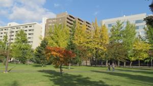 芝生広場の紅葉