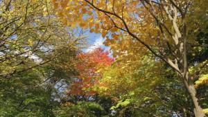 日本庭園内の紅葉
