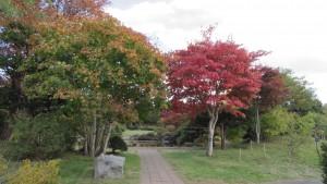 日本庭園入口のハウチワカエデとヤマモミジ