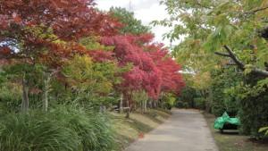 園路の紅葉1