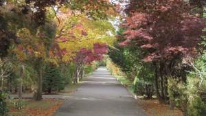 園路の紅葉2
