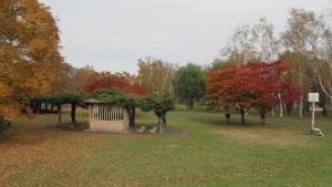 ふじ棚と紅葉