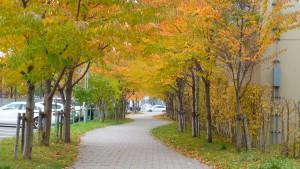 黄葉のトンネル