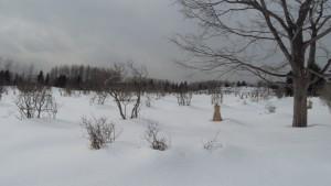 ライラックの森
