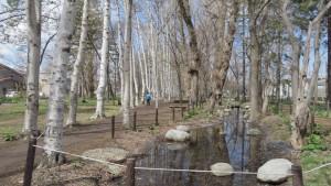 防風林の中の池