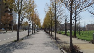 カツラ並木