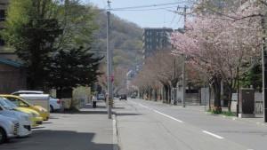 市道南4条線の桜並木