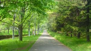 緑の中の緑道