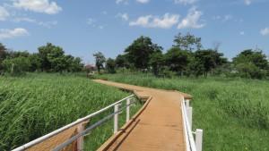 東雁来公園の木道