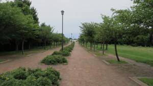 桜並木「星観緑地」