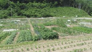市民農園 白川あらい農園