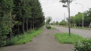 鉄道沿東緑道とあいの里東通