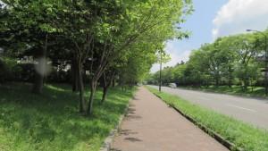 百年記念公園通線のツリバナ並木