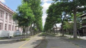 馬車鉄道線路とニセアカシア並木