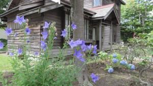 キキョウの花と旧有島家住宅