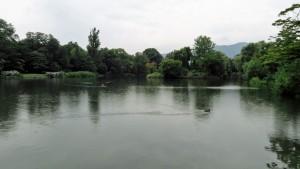 菖蒲池と泳ぐマガモ