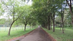 ハルニレの並木