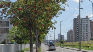 鉄工団地通とナナカマド並木