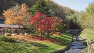 厚別川と紅葉の木立