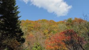 山の紅葉と白い雲
