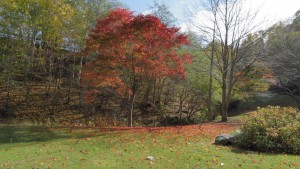 真っ赤な紅葉と落ち葉
