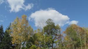 白い雲と紅葉の木々