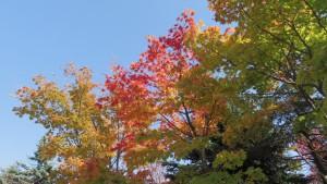 紅葉の木立