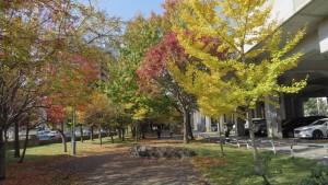 散策路と紅葉