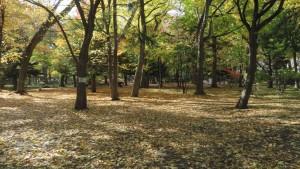知事公館 紅葉の木立と落ち葉