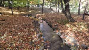 小川と落ち葉