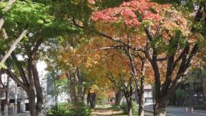 北3条ミニ大通 散策路の紅葉