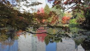 道庁赤レンガ 池に映る紅葉