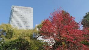 紅葉の木立とビルディング