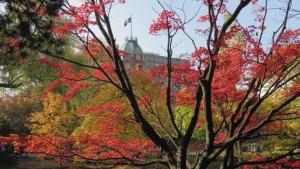 ヤマモミジの紅葉と赤レンガ