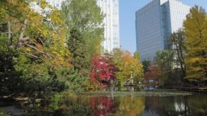 池と紅葉とビルディング