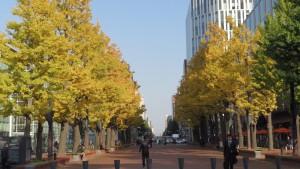北3条広場のイチョウ並木の黄葉