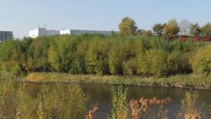 豊平川と河畔林の紅葉