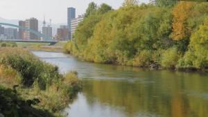 豊平川の流れと河畔林の紅葉