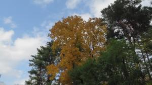 青空と黄葉の木立