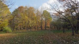 黄葉の木立