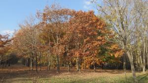散策路と紅葉の木立