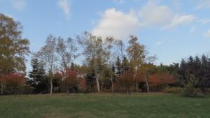 青空と紅葉の木立