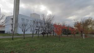 研究本館前の紅葉