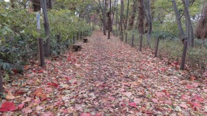 落ち葉が積み重なる散策路
